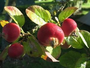 Swelheim Sieraden Appel